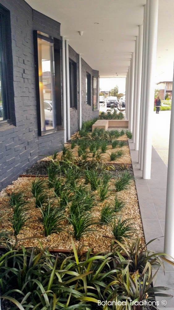Toomah Community Centre street frontage.  The building has a large overhang.  We have softened the area by including a deep garden bed with shade tolerant plants.  In this case Liriope 'Just Right' and Dianella 'Blaze'.