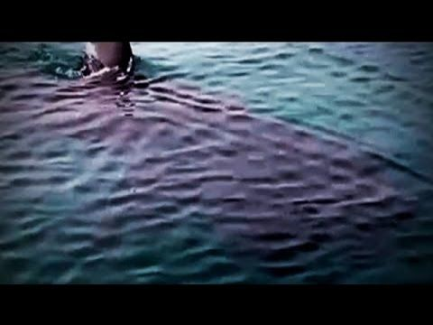 Megalodon Shark 2015 - Encounters with the Monster Caught on Tape