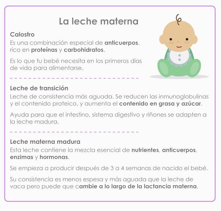 ¿De qué está compuesta la leche materna?
