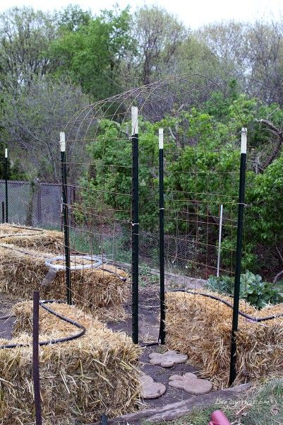 Straw Bale Gardening - How to build a trellis. #diy #gardening http://livedan330.com/2015/05/08/building-a-trellis-for-straw-bale-gardening-tomatoes/