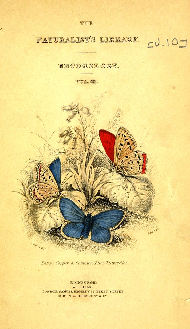 Printed matter - Title Page - Natural History of British Butterflies