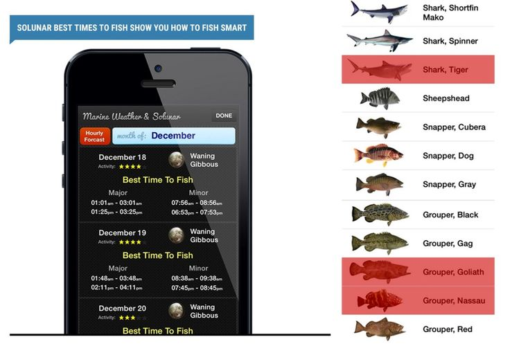 12 best outdoor activities images on pinterest fishing for Bass fishing apps