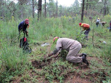 Inician campaña de reforestación en Tetlanohcan