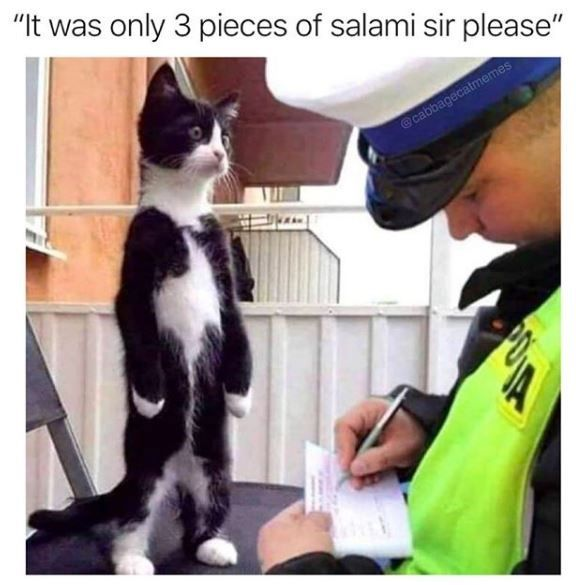 Hefty High Quality Caturday Collection 55 Cat Memes Cat Memes Funny Cats Funny Animal Memes