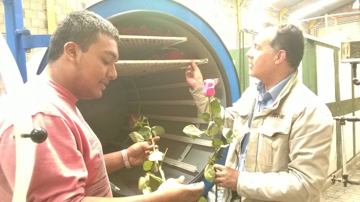 http://www.pinterest.com/Florliofilizada/dr-jorge-rivera-flores-preservadas/