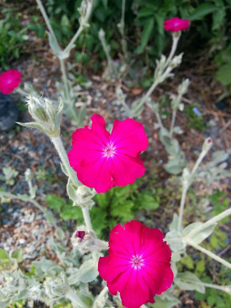 Les 25 meilleures id es concernant plante m diterran enne sur pinterest jardin sec basilic for Fleurs jaunes jardin vivace
