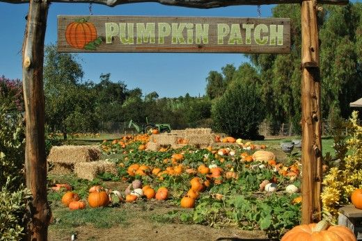 Pumpkin Patch Locations in San Diego – 2012