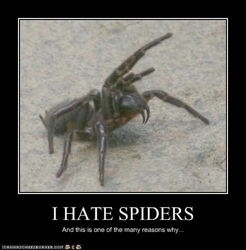 Funny Spider Meme : Best spiders images on pinterest funny stuff