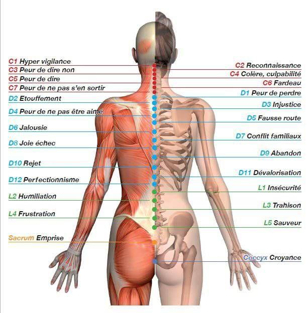 MAL A DIT : Le point de vue yogique est de regarder le corps comme un instrument de développement spirituel. Comme chaque instrument notre corps