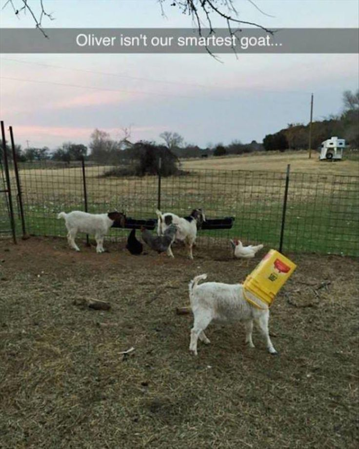 Funny Pictures Of The Day - 43 Pics