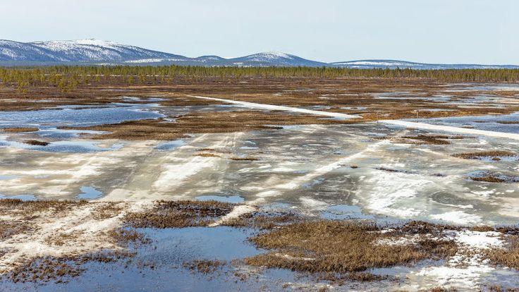 Snowscooter tracks on a swamp - photo heinakenka