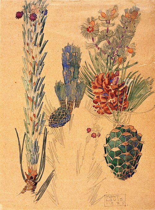 Pine Cones, Mont Louis - Charles Rennie MacKintosh ,1925 Scottish, 1868 - 1928 Watercolour and pencil,