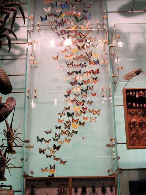 Museum of Natural History: this photo imparticular brings so many memories to when i fell in love with my hubby:)