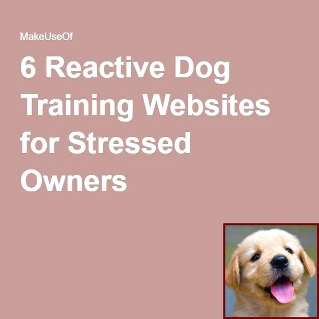 1 Have Dog Behavior Problems Learn About Potty Training A