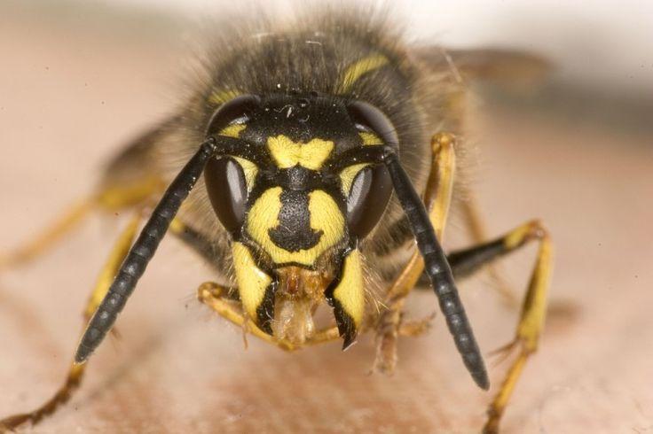 Das ist der genialste Trick gegen Wespen. Eine Papiertüte, mehr brauchst du nicht!