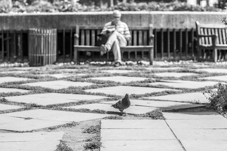 Muž a holub