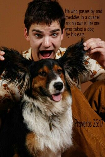 Proverbs 26:17 Like someone grabbing hold of a dog's ears Is the one passing by who becomes furious about a quarrel that is not his.