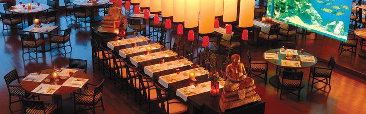 #Kohylia #Cuisine #Polynesian #Restaurant & #Sushi #Bar While the #restaurant's centrepiece is a #brilliant #aquarium,  #diners enjoy #romantic  #vistas as the sun sets its deep orange hues turning slowly to night.