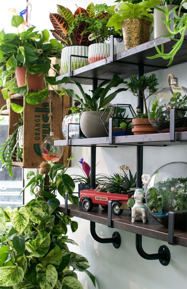 129 best images about indoor gardening on pinterest for Indoor gardening machine