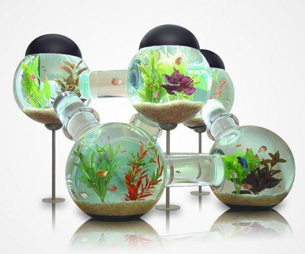 aquarium incroyable qui va épater vos poissons