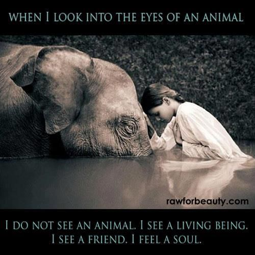 When I look into the eyes of an animal, I do not see an animal, I see a living being, I see a friend, I feel a soul