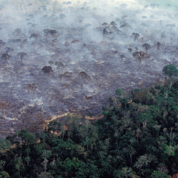 Aerial View Of Amazon Rainforest Burning Farm Management With