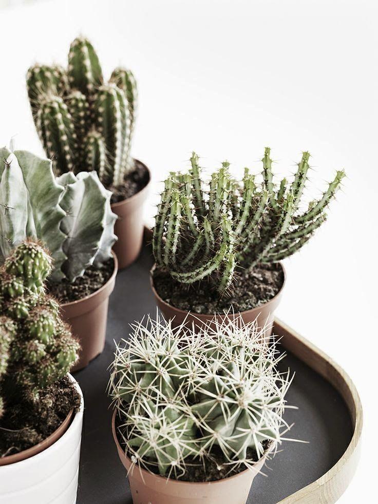 Méchant Studio Blog: cactus and thorns
