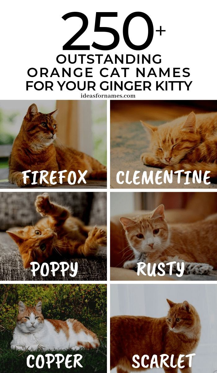 Outstanding Orange Cat Names Perfect For Your Ginger Kitty Best Name Ideas For Ladies Only Blog Share Blog Cat Ginger Ideas Katzen Orange Witzig