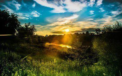 Scarica sfondi raggi, sunset, sera, foresta, estate, alberi verdi