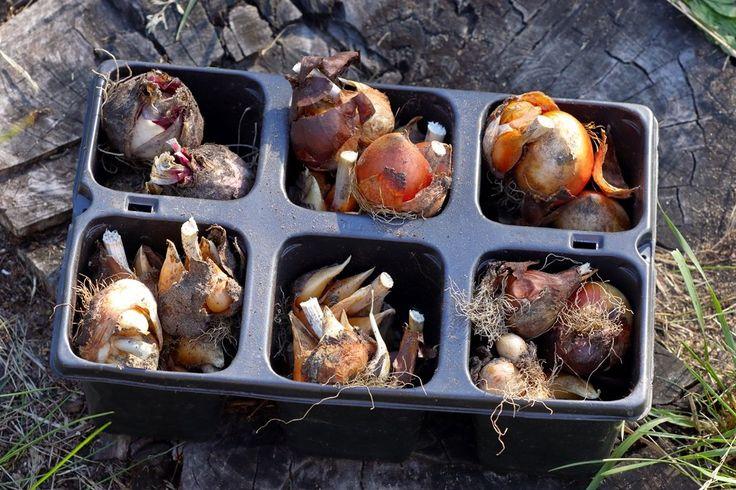 Чаще всего осенью высаживают цветы, но эту пору года можно использовать и для посадки овощей