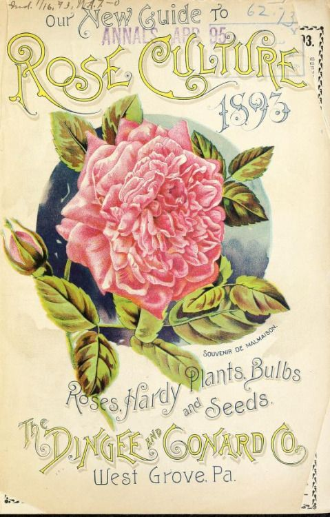 Front cover of 'Our New Guide to Rose Culture' (1893) with an illustration of 'Souvenir de Malmaison' roses. The Dingee and Conard Co. West Grove, Pa.U.S. Department of Agriculture, National Agricultural Library.archive.org