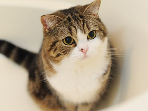 The face when Maru watches a toy. #Maru