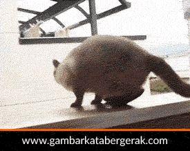 Gambar animasi binatang lucu bergerak, kucing loncat tapi gak nyampe :D