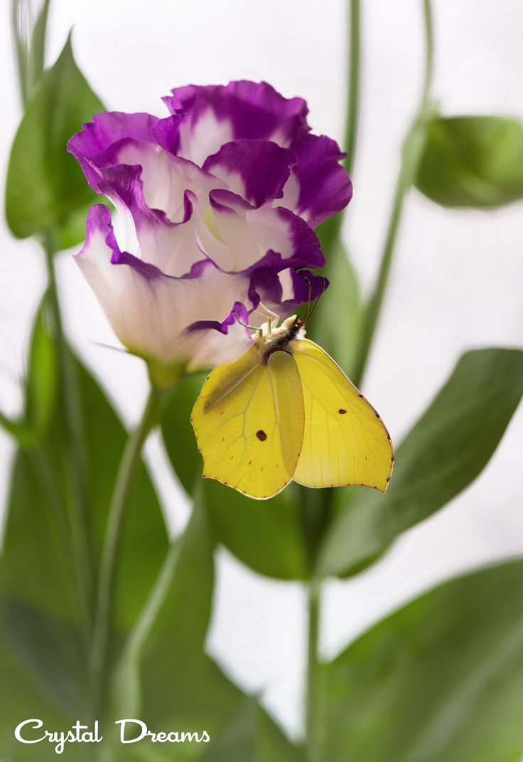 Freshness By Tatiana Krylova Nature PicsScience NaturePhotosBeautiful ButterfliesBeautiful FlowersButterflyRestSnakesAli