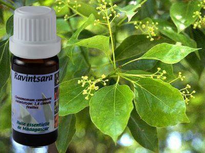 huile essentielle de ravintsara anti-infectieuse et antibiotique, elle évite les risques de surinfection avec les maladies virales.