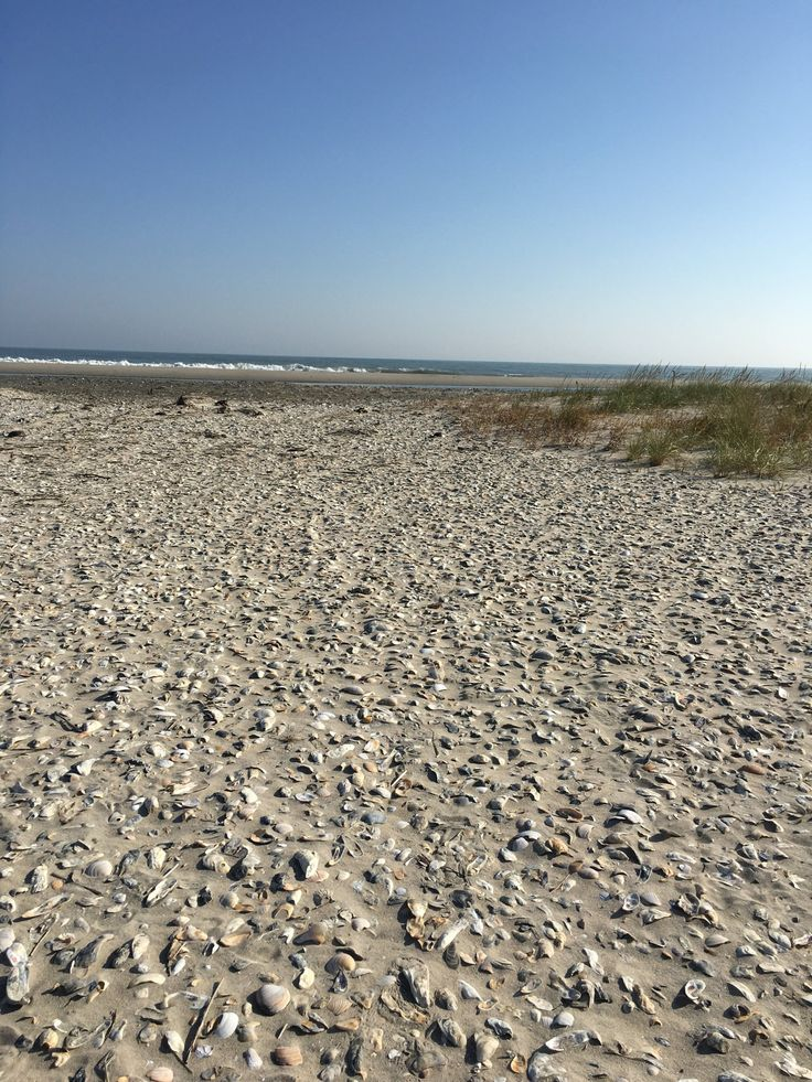 One of the best seashell beaches is Metompkin Island, Virginia