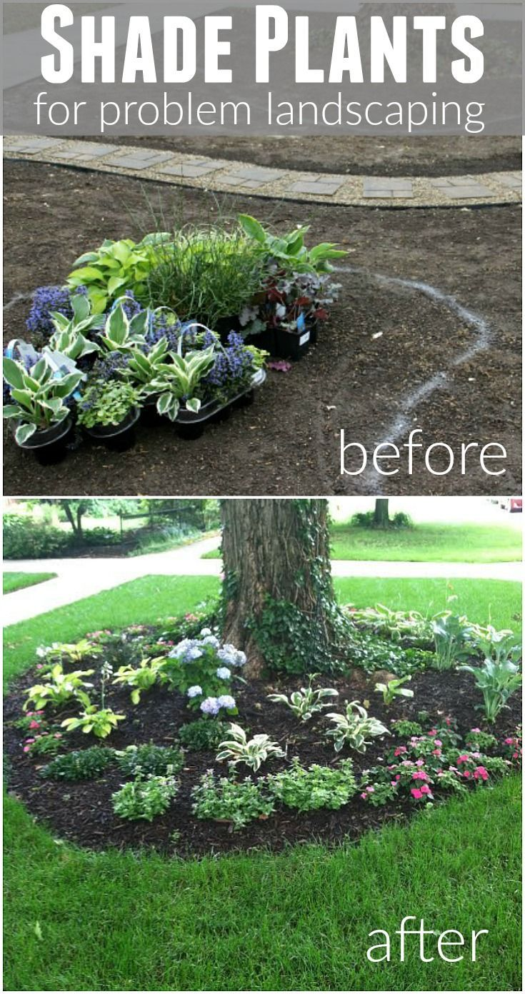 Perfect Shade Plants For Problem Landscape