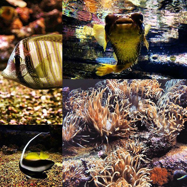 #cretaquarium10years @Cretaquarium  @CreteRegion @myhersonissos #Greeksummer @VisitGreecegr @DiscoverGRcom #lovingreece  #menoumellada #cretaquarium  @heraklion_info_point  #aquarium #sea #marine #underwater #marinelife #research #greece #fish  #science #mygreeksummer #explore #discovery #kids #fun #crete #myhersonissos #vacation #media