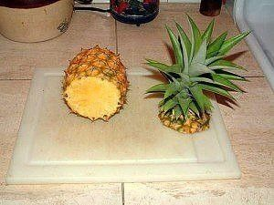Как вырастить ананас из купленного в магазине плода за 4 шага!  Давняя мечта вырастить у себя дома ананас может осуществиться, тем более с использованием бросового материала для посадки.  Как приятно насладиться вкусной мякотью, а после посадив макушку в горшок, любоваться экзотическим растением у себя на подоконнике не один год. Как говорится, пригодятся и вершки и корешки. Вырастить ананас на удивление просто. Лучше начинать это делать в теплое время года, тогда укоренение будет…
