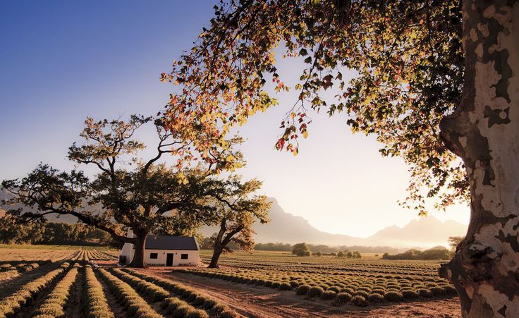 Franschhoek - Western Cape, South Africa by Nomadic Vision Travel Photography