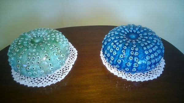 Medium sea urchins-code 9800a