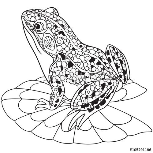 zentangle frog coloring page