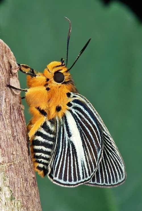 Schmetterl