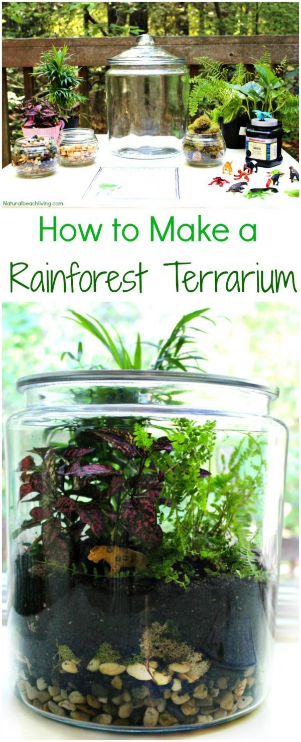 best 25 frog habitat ideas on pinterest frog terrarium reptile