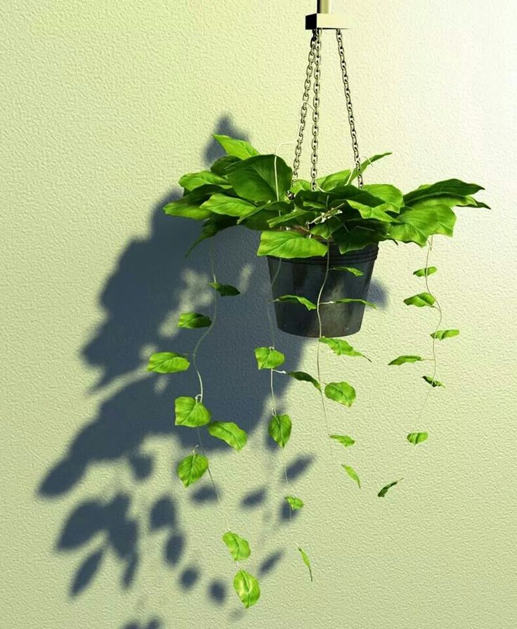 Plant 3dsmax vray photoshop
