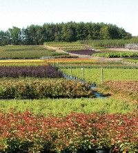 Glen Williams Farm & Distribution - Our 900 acre #farm in Glen Williams, Ontario, is conveniently located approximately 60 kilometres northwest of Toronto. We produce more than 800 hardy #nursery stock varieties, ranging from evergreens, deciduous trees and shrubs.