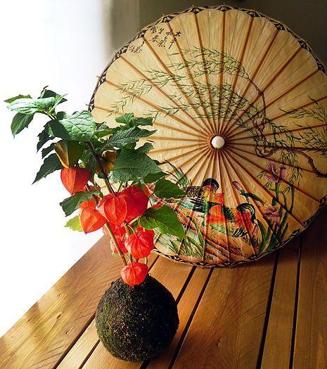 Resultado de imagen para plantas japonesas