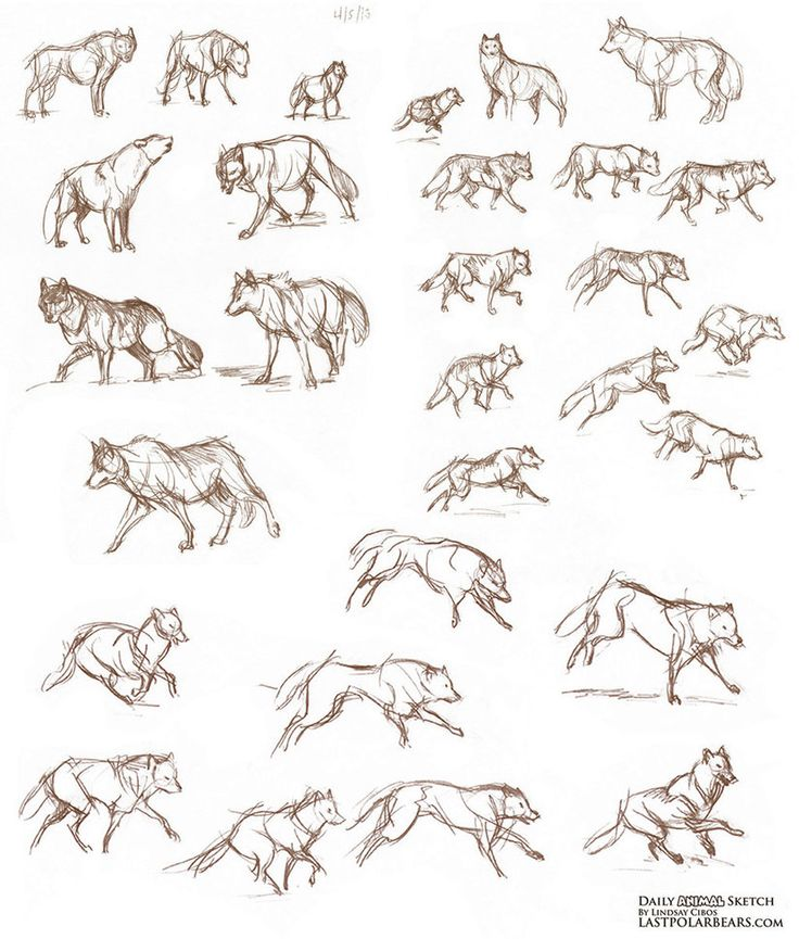 Wolves from the sketchbook by LCibos on DeviantArt