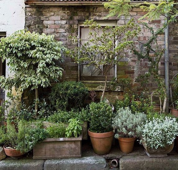 Potted Garden                                                                                                                                                                                 More