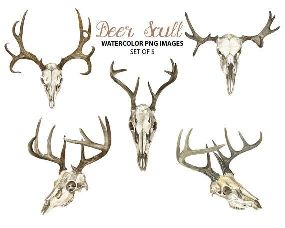 Deer Skull Clipart Watercolor Animal Clip Art Tribal Etsy In 2021 Deer Skulls Deer Drawing Deer Skull Tattoos